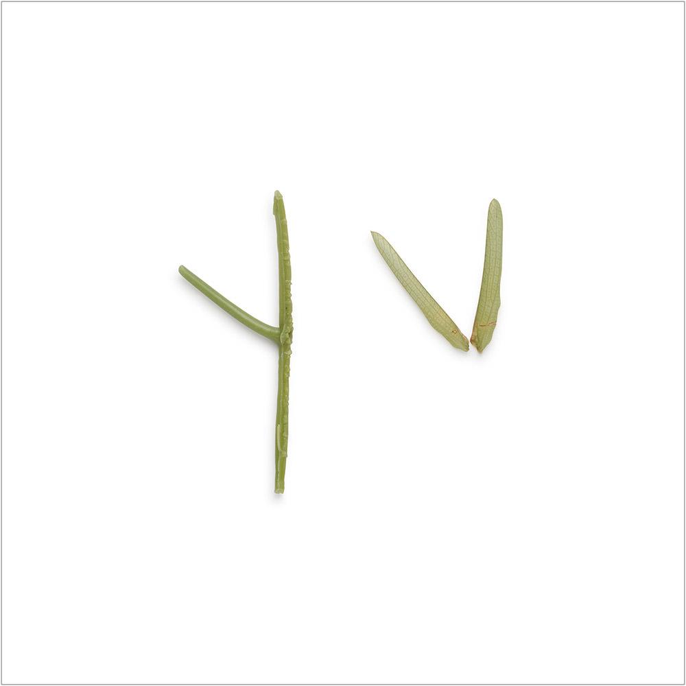 Involuntary-Pairs-liina-klauss-plastic-stem—grasshopper—liinaklauss
